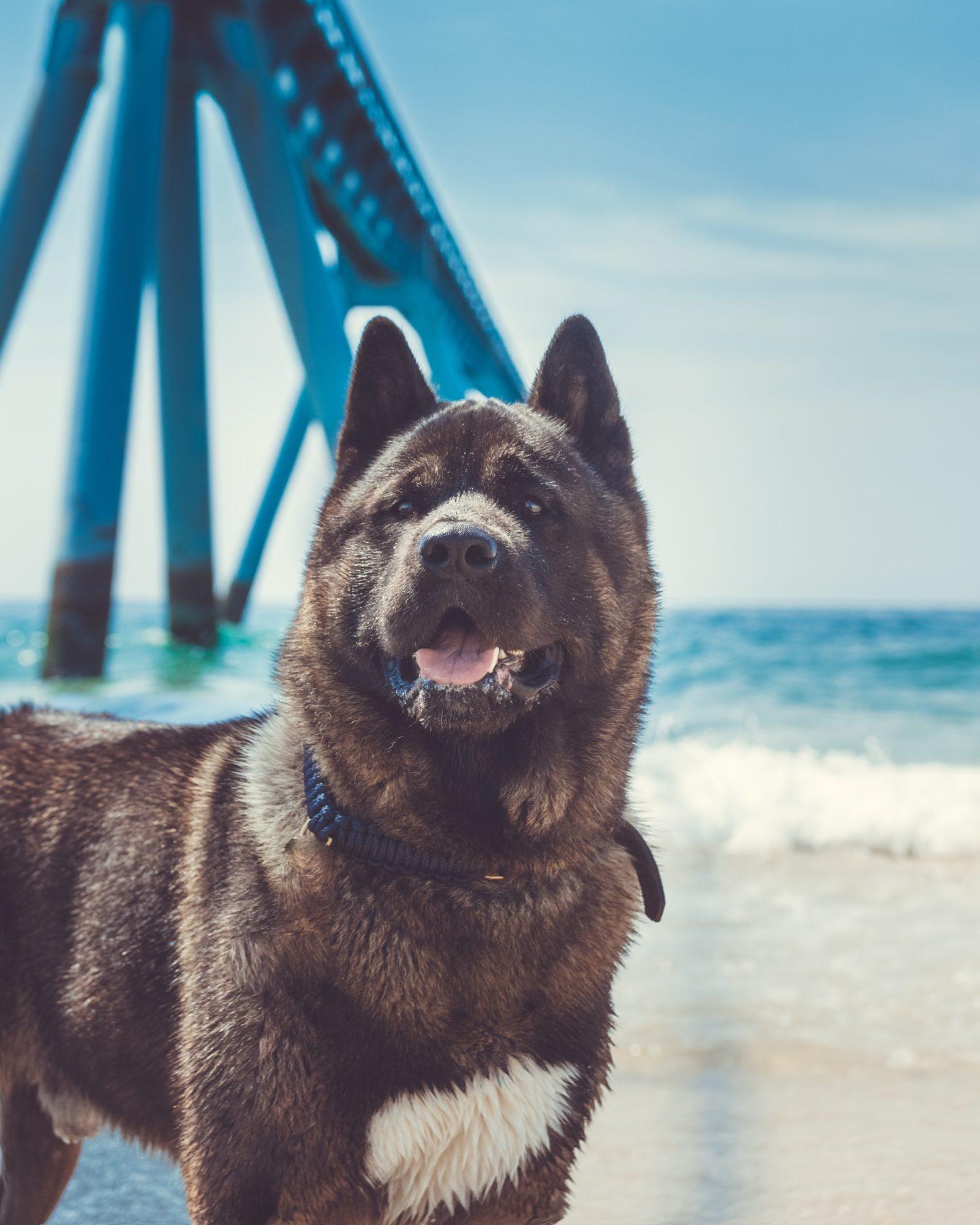 Un TEST ADN pour chien, découvrez les résultats de Malcolm !